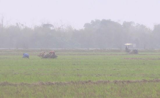 Nông dân Quảng Trị gặp khó khăn do thời tiết thất thường