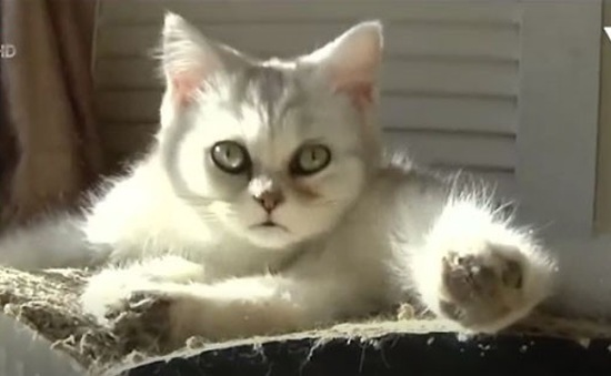Trào lưu nuôi mèo ảo tại Trung Quốc
