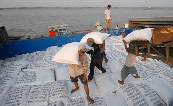 Nguồn cung thiếu, giá lúa tăng mạnh