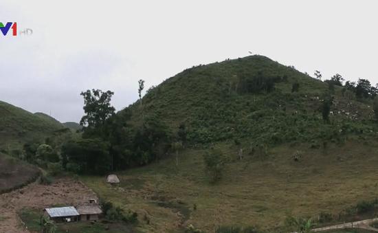 Guatemala giám sát rừng bằng vệ tinh
