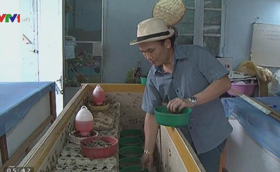 Chàng trai Lào khởi nghiệp với nghề nuôi dế mèn