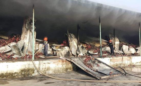 Bình Thuận: Cháy kho thanh long, thiệt hại hàng chục tỷ đồng