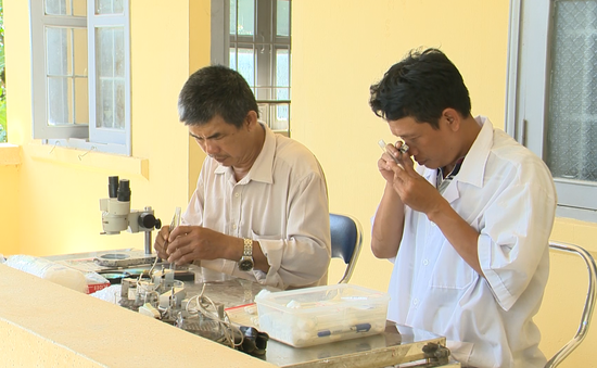 Số ca sốt rét liên tục tăng tại Phú Yên, Bộ Y tế khẩn trương vào cuộc xử lý