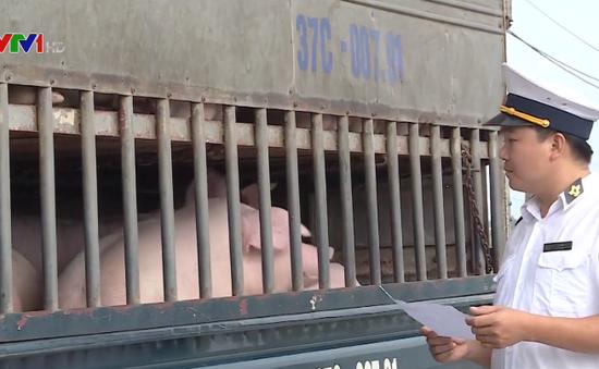 Ngăn chặn dịch tả lợn châu Phi từ biên giới