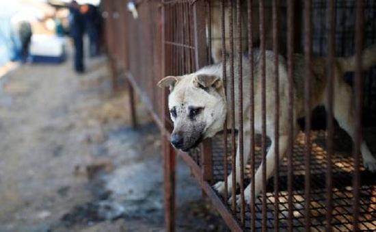 Đài Loan sẽ khởi tố 2 lao động Việt về tội giết, nấu thịt chó