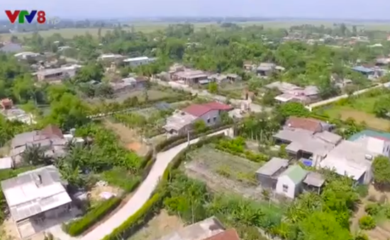 Xanh mướt hàng rào xanh ở các làng quê Hà Tĩnh