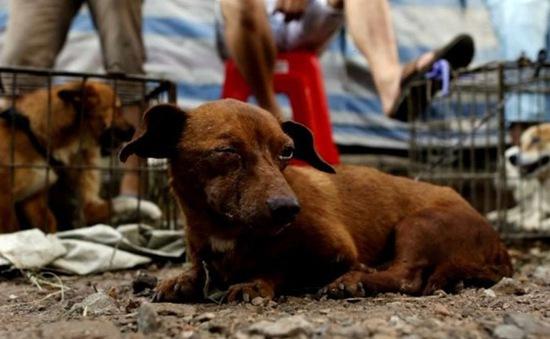Đài Loan (Trung Quốc) cấm ăn thịt chó, mèo