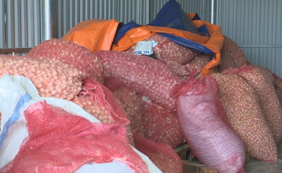 Hàng trăm tấn tỏi có nguy cơ đổ bỏ