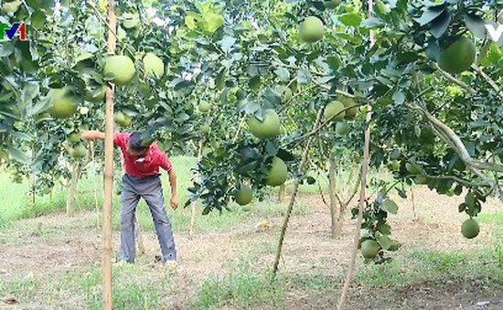 Những bước đột phá mạnh mẽ của ngành nông nghiệp