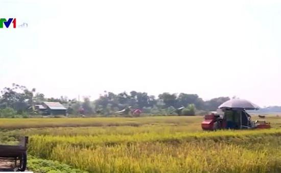 Máy gặt ra đồng bị công an xã cản trở