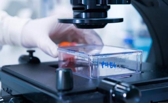 Hy vọng mới cho bệnh nhân ưng thư: Điều trị bằng cơ chế ức chế miễn dịch âm tính