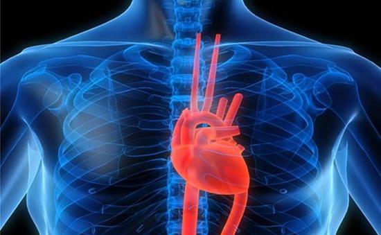Phát triển thành công mô tim đập như tim thật