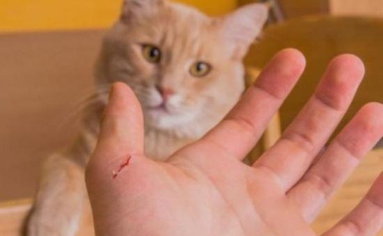 Du khách người Anh tử vong do bị mèo cắn tại Ma-rốc