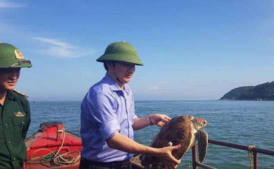 Một cá thể rùa được thả về biển ở Hà Tĩnh