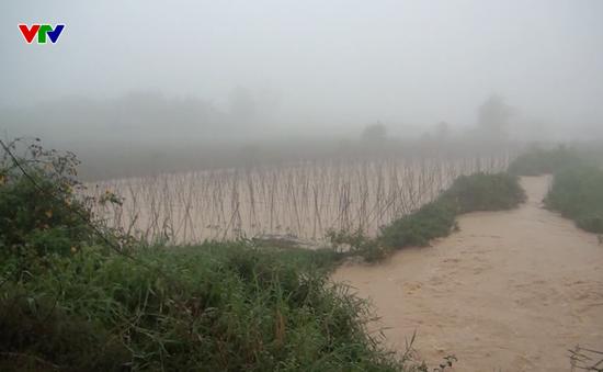 Hàng chục héc-ta rau màu tại Lâm Đồng bị ngập nặng
