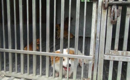 Hà Nội thành lập đội săn bắt chó thả rông