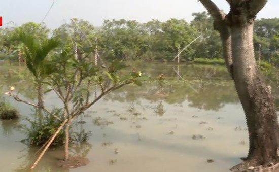 Hơn 100ha rau lá và rau quả thiệt hại do bão số 9