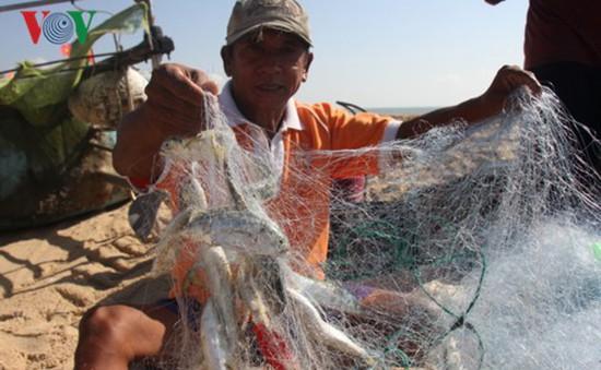 Ngư dân Phước Hải ra biển kiếm tiền triệu sau bão số 9
