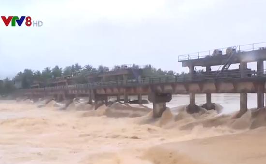 Bình Định: Gần 7.000 ha lúa mới gieo sạ có nguy cơ mất trắng do mưa lũ