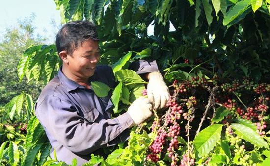 Hướng đi nào cho chuỗi cà phê bền vững?
