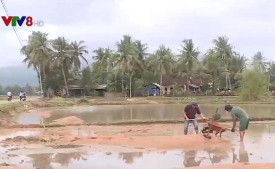 Bình Định điều chỉnh lịch vụ mùa do ảnh hưởng mưa lớn