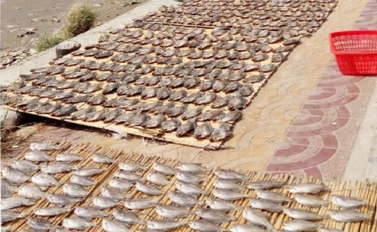 Làng nghề cá khô tất bật vào mùa Tết