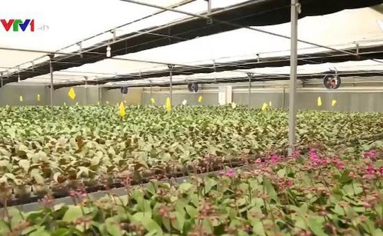 Công việc của công nhân trồng hoa công nghệ cao