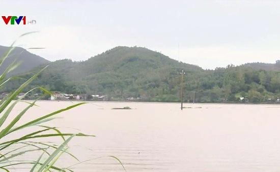 Nam Trung Bộ: Hàng nghìn ha lúa mới gieo sạ thiệt hại do mưa lớn