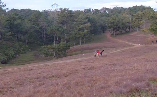 Lâm Đồng: Truy tìm đối tượng tàn phá đồi cỏ hồng