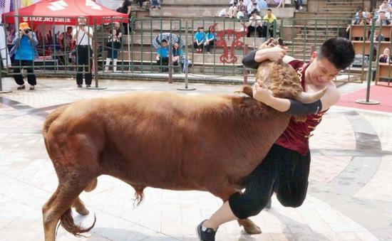 Đấu vật với bò - Bộ môn thể thao gây tranh cãi tại Trung Quốc