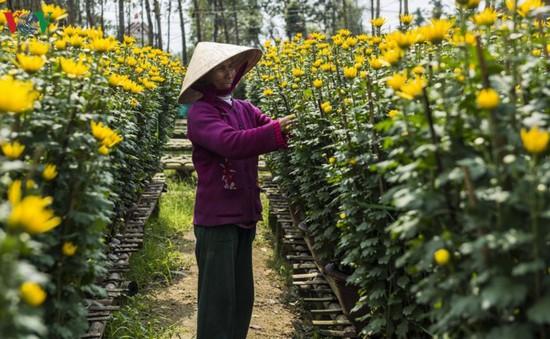 Buổi sáng ở làng hoa truyền thống xứ Huế