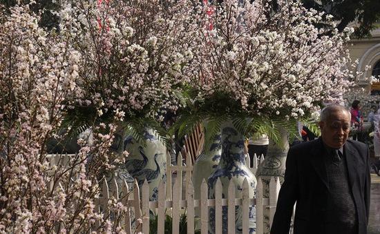 Lạng Sơn lần đầu tổ chức Lễ hội hoa đào xứ Lạng
