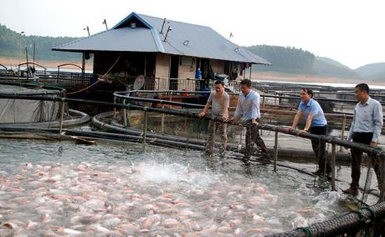Huyện Yên Bình (Yên Bái): Những bước tiến trong phát triển kinh tế