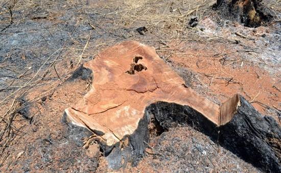 Tây Nguyên: Điểm nóng tranh chấp đất rừng
