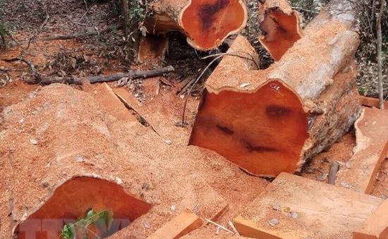 Điều tra vụ phá rừng trái phép tại Vườn quốc gia Yok Đôn, Đắk Lắk