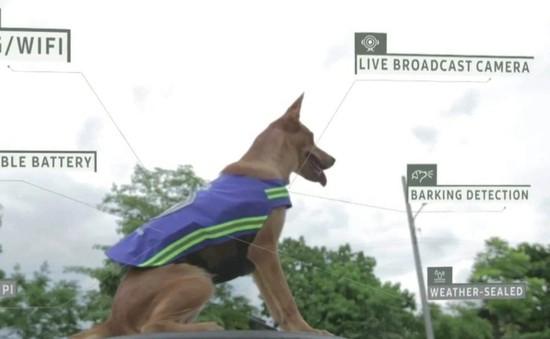 Thái Lan: Biến chó hoang thành vệ binh thành phố