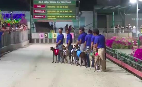 Sôi nổi ngày hội đua chó ở Bà Rịa - Vũng Tàu