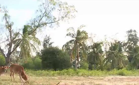 Bình Thuận gặp khó khi vực dậy các dự án du lịch bỏ hoang 20 năm