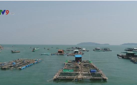 Ngư dân xã đảo làm giàu từ nuôi cá lồng bè