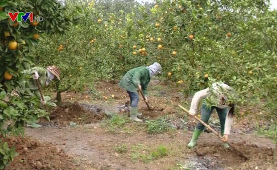 Liên kết doanh nghiệp - nông dân tạo động lực phát triển