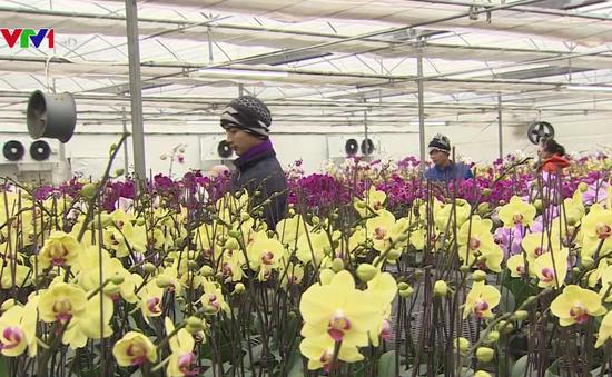 Ứng dụng khoa học công nghệ vào trồng hoa