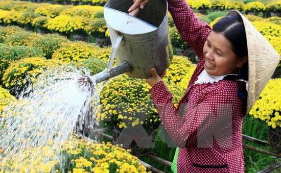 Khách tham quan làng hoa Sa Đéc, Đồng Tháp tăng mạnh