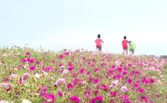 Miền quê đáng sống: Đường làng nở hoa
