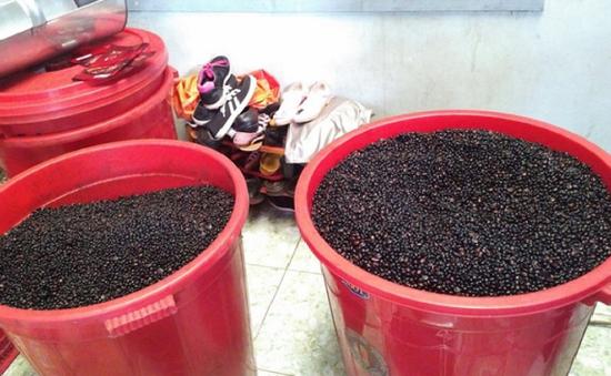 Phát hiện cơ sở cà phê pha trộn phụ gia không rõ nguồn gốc ở Kiên Giang