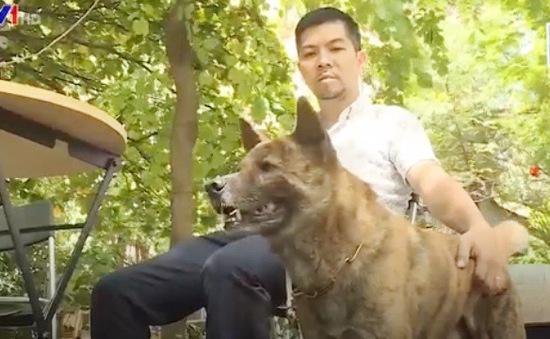 Chó Mông cộc - báu vật vùng Tây Bắc