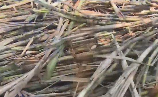 Tồn kho ngành mía đường chưa phải ở mức quá lớn