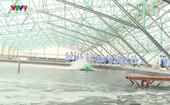 Lễ thả tôm giống đầu tiên tại khu công nghệ cao Bình Định
