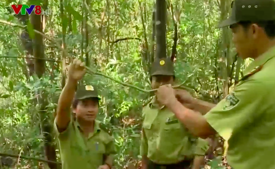 Tăng cường trách nhiệm bảo vệ rừng vùng giáp ranh
