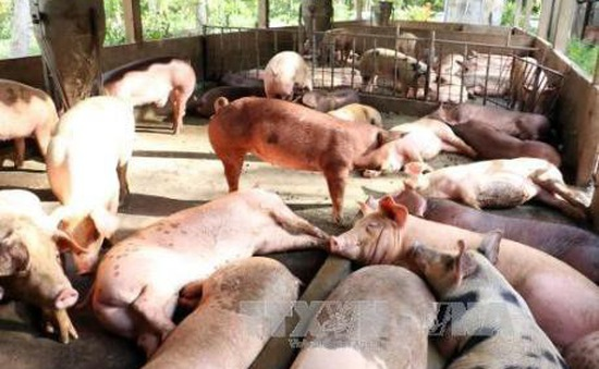 Lâm Đồng: Người dân yêu cầu khắc phục ô nhiễm tại trại chăn nuôi như đã cam kết