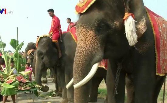Tiệc buffet trái cây dành cho... voi tại Thái Lan